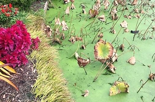 gardens pond green.jpg.1
